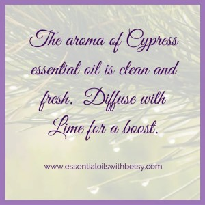 The aroma of Cypress essential oil is clean and fresh. Diffuse with Lime for a boost.