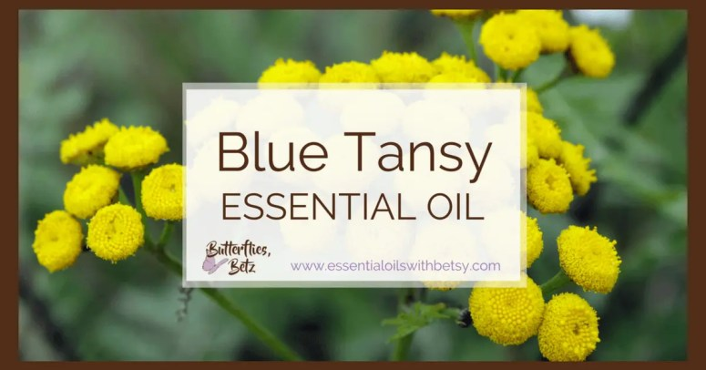 doTERRA Blue Tansy Essential Oil doTERRA Blue Tansy Oil is coming to doTERRA!  At the 2107 doTERRA convention,  Dr.  Hill announced that we will now carry doTERRA Blue Tansy Essential Oil.  Blue Tansy oil is an exciting addition to our essential oil arsenal!  Continue reading to learn about using Blue Tansy essential oil. TIP:  You can read a list of all new doTERRA oils in 2017 HERE.