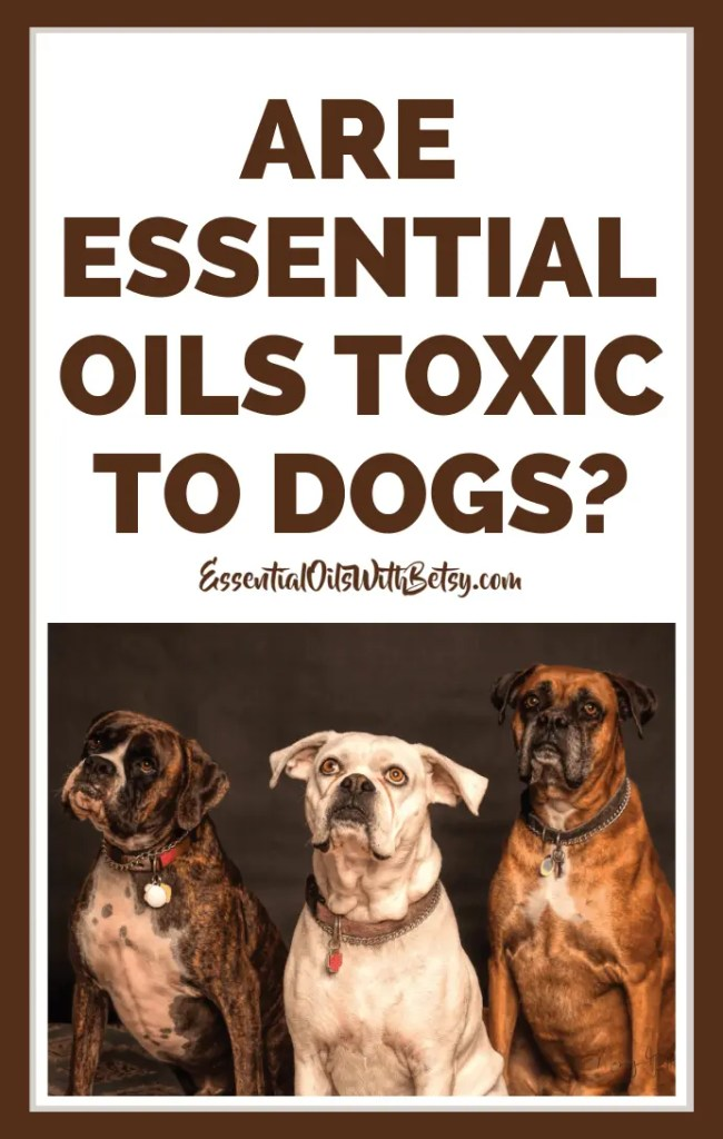 Are essential oils toxic to dogs? Using essential oils safely around your pet dog. Sound advice from an avid essential oil user and experienced dog mom. #essentialoils #naturalhealth #doTERRA #essentialoilswithbetsy