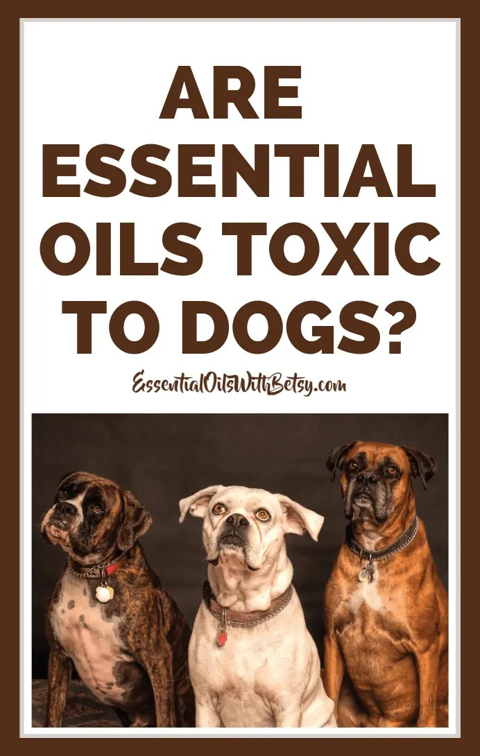 Are essential oils toxic to dogs?  Using essential oils safely around your pet dog.  Sound advice from an avid essential oil user and experienced dog mom. Essential oil safety around pet dogs |  Essential oils for dogs |  Are oils safe for my dog? |  doTERRA oils pet dogs | what essential oils are toxic to dogs? | essential oil pet safety  #essentialoils #naturalhealth #doTERRA #essentialoilswithbetsy