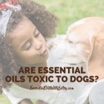 ig are essential oils toxic to dogs