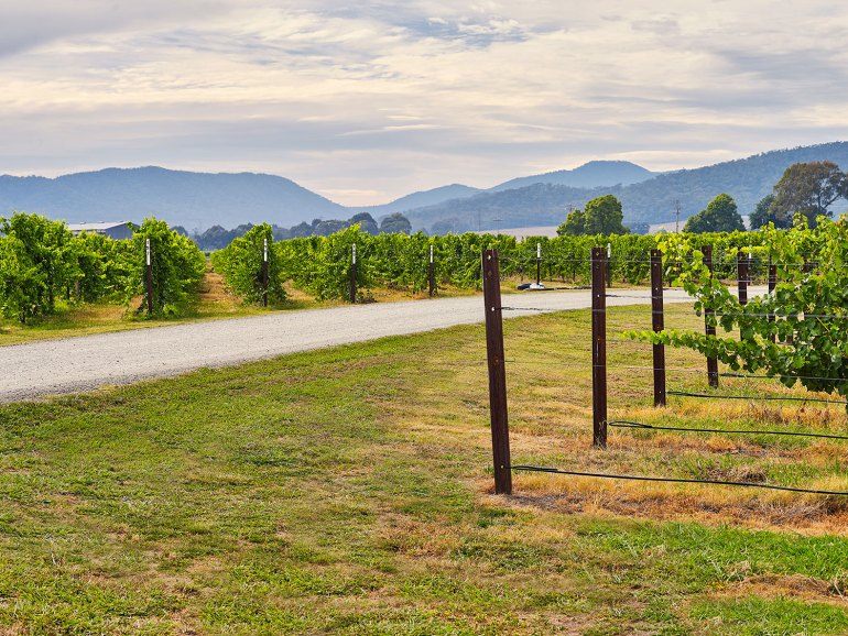 Chrismont's King Valley vineyard