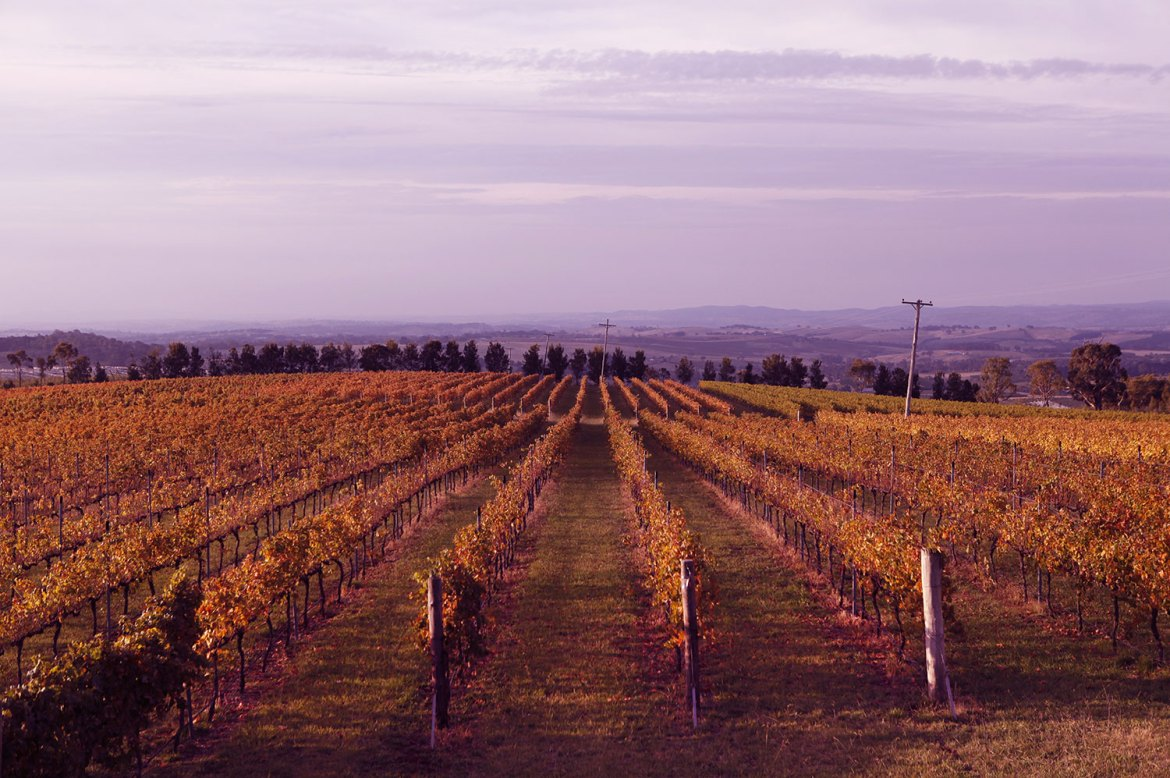 De Salis Wines' Lofty Vineyard is elevated 1050m above sea level and offers 360 degree views