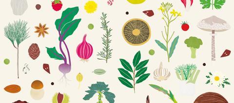 Piccoli Naturalisti Osservatori: lo stupore e la meraviglia