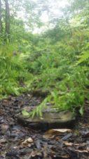 greenislandgardens9