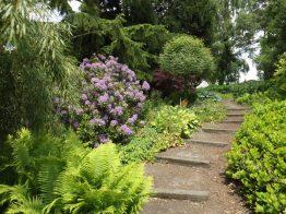 Beth Chatto Gardens (26)