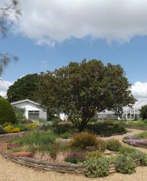 Beth Chatto Gardens (46)