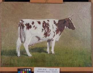 Painting of the Alexander family's prize winning cow Nancy. (After treatment by Phillips Art Conservation LLC)