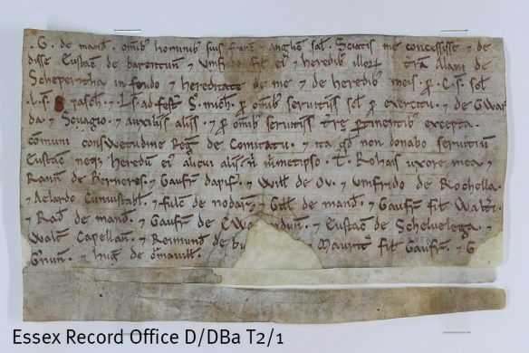 The deeds are not dated but this one must date from before the second half of 1140, before Geoffrey was made Earl of Essex, as he is named only as G de Mand[eville]. In this deed de Mandeville grants the land of Alan de Scheperitha to Eustace and Humphrey de Barentun.  (D/DBa T2/1)