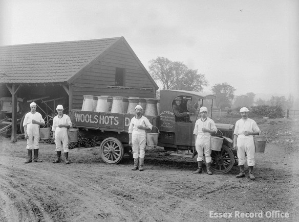 Jackson's dairy farm at Wickford, early 1920s, when new hygiene rules were having an effect on cowmen's clothing. Essex became the first county to hold a clean milk competition in 1920. (D/F 269/1/4492)