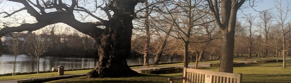 View of the bench sitting by large oak tree