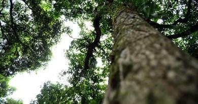 Semana da Árvore