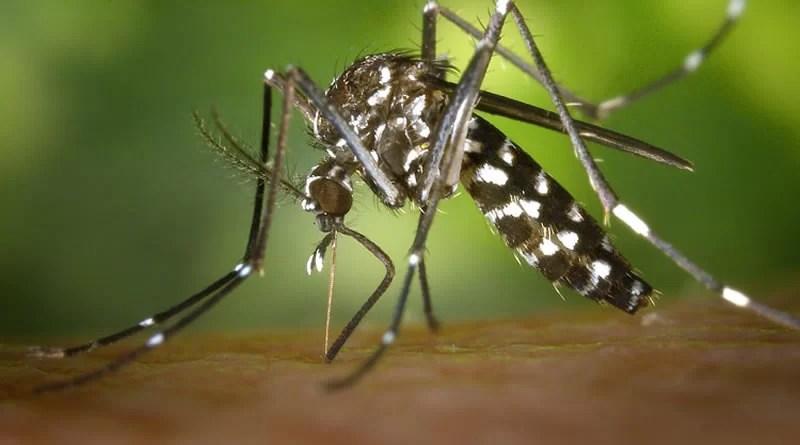 O perigo pode estar em casa: 80% dos focos do mosquito Aedes Aegypti estão em residências