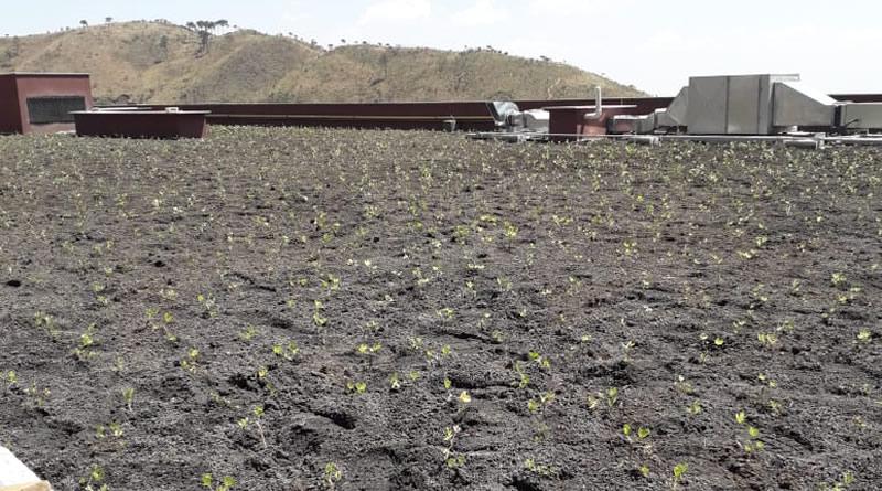 Telhados verdes captam água da chuva e podem ser solução para as enchentes das grandes cidades