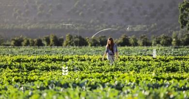 La inteligencia artificial acelera la solución de desafíos ambientales en Latinoamérica
