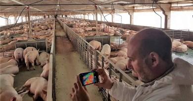 El robusto teléfono inteligente Cat S60 ayuda  a los ganaderos porcinos a mejorar la eficiencia productiva