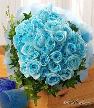 2014-mavi-gül-gelin-çiçeği