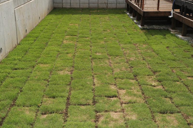 町田市で芝生のお庭の施工をさせていただきました