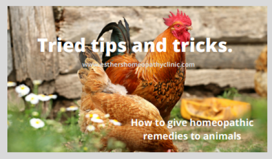 Giving homeopathic remedies to Animals Esther's Homeopathy Clinic