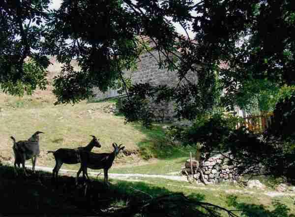 huis te koop in de Ardèche