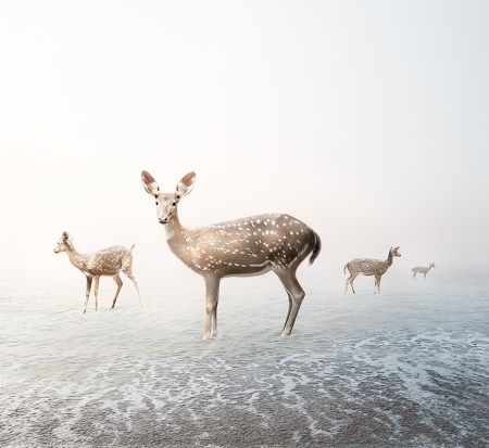 Stay_My_Deer_©_Alice_Zilberberg_2018