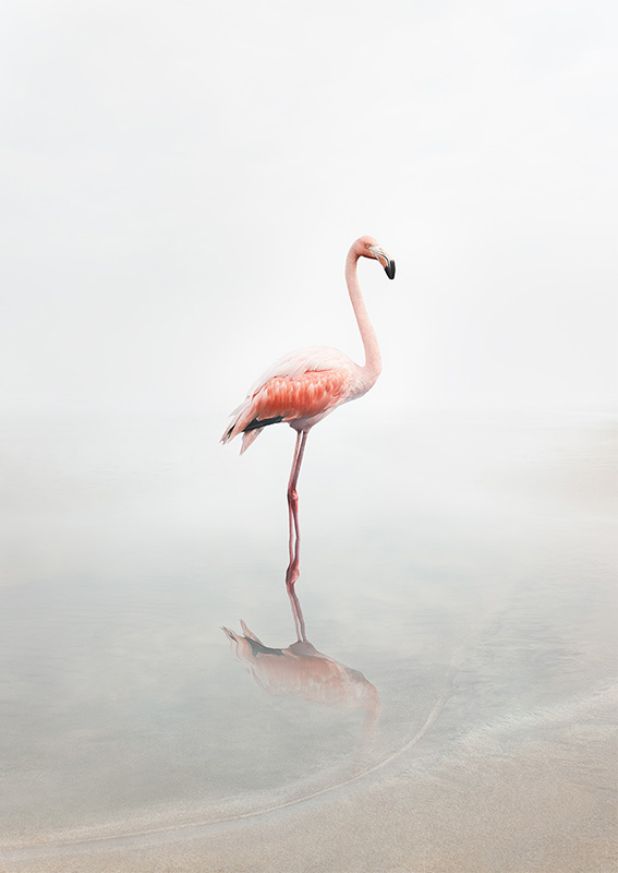 For_Now_Flamingo_©_Alice_Zilberberg_2018