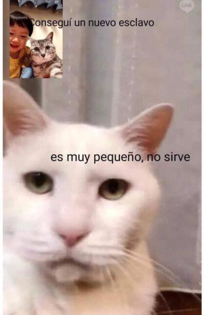 Ia Stoy Arto Gato Meme El Deforma Un No Ticiero De Verdad