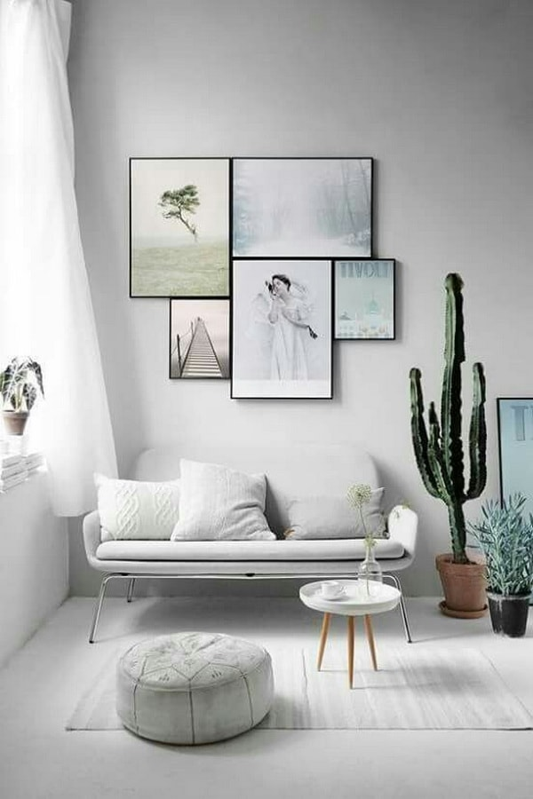 Cactus to decorate the room