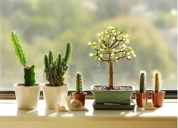Cactus in Windows