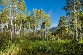 Aspen real estate 103016 140139 287 Mcskimming Road 5 190H