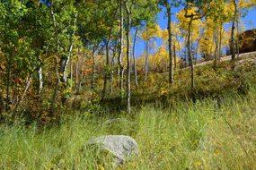 Aspen real estate 020517 146209 310 Eastwood Drive 3 190H