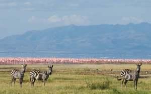 Tanzania Packages-lake-manyara-national-park