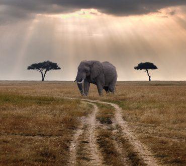 Masai-Mara-Safaris-in-Kenya.