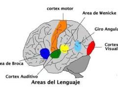 De la comunicación a la neurocominucación