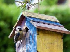 casa-e-pássaro