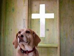 cruz-conjunção-cão-lenormand
