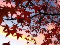 árvore-conjunção-estrela-lenormand