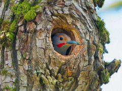 árvore-conjunção-pássaro-lenormand