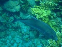 árvore-conjunção-peixes-lenormand