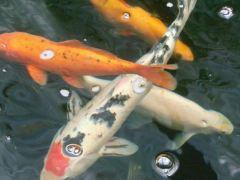Cruz-conjunção-peixes-lenormand