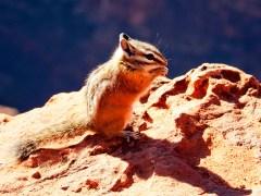 morro-conjunção-rato-lenormand