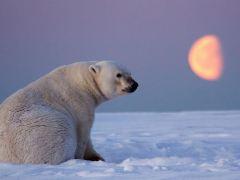 urso-conjunção-lua-lenormand