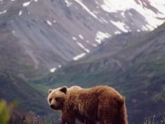 urso-conjunção-morro-lenormand