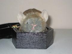 rato-conjunção-caixão-lenormand