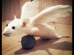 rato-conjunção-cegonha-lenormand