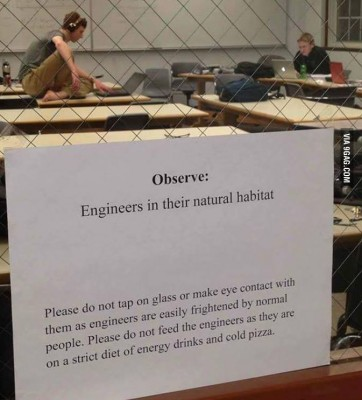 engineers in their natural habitat