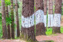 41365717-El-bosque-de-Oma-Urdaibai-Reserva-de-la-Biosfera-Bizkaia-Espa-a-Foto-de-archivo