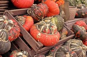 pumpkin-4465394_960_720