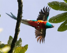 La Historia del Quetzal, Ave Nacional y Símbolo Patrio de Guatemala