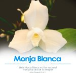 La Monja Blanca, Flor Nacional de Guatemala – parte 1